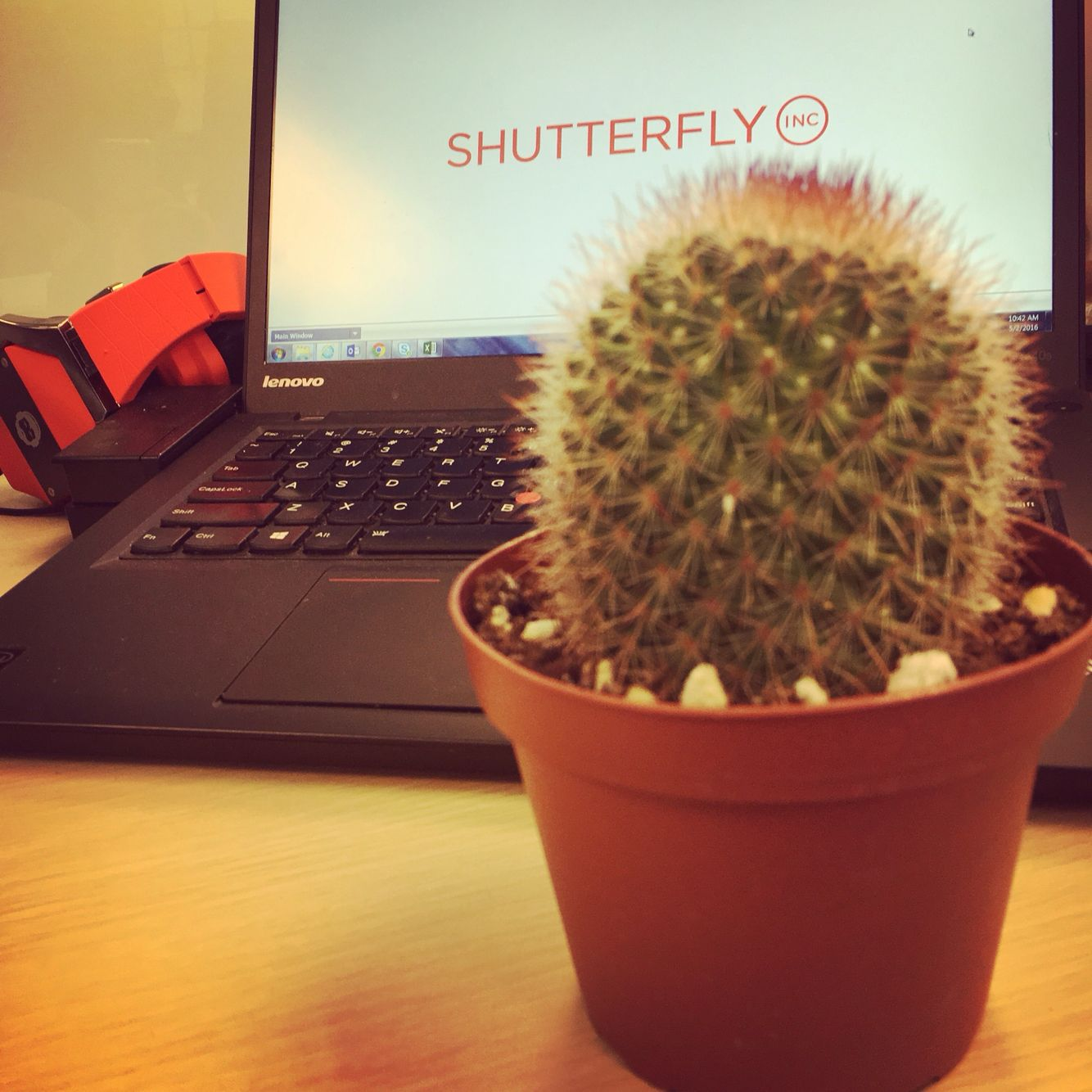My office cactus archie hoping to keep him alive and healthy