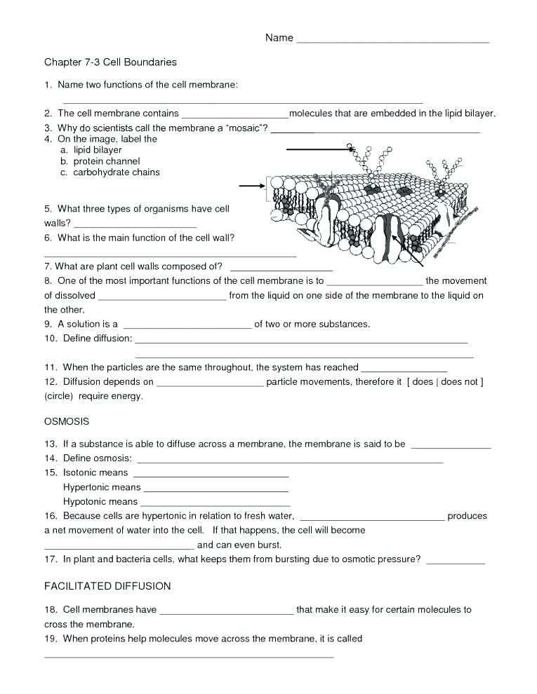 Ratio Worksheets Biology Worksheet Cells Worksheet Worksheets Free