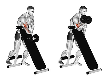 Exercise Database Biceps Jase Stuart The Better Body Coach Body Workout Plan Personalized Workout Plan Biceps