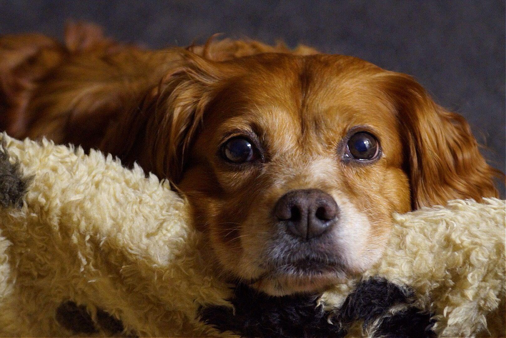 Lola, my best friend...