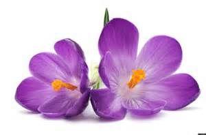 Imprimer Le Dessin En Couleurs Nature Fleurs Numéro