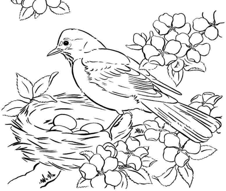 bird coloring pages saferbrowser yahoo image search results - Bird Coloring Pages