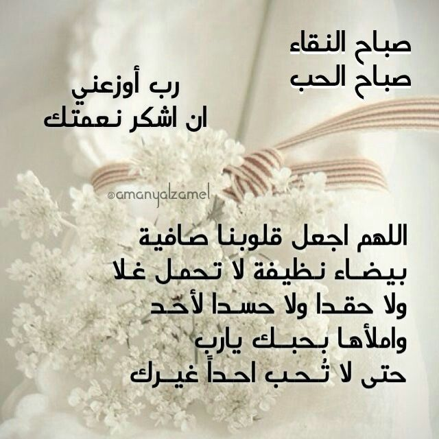 صباح النقاء Good Morning Roses Good Morning Quotes