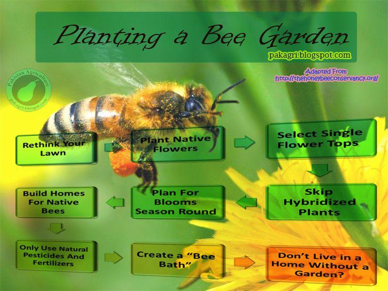 Plant A Bee Garden Bee Garden Garden Insects Wildlife Gardening