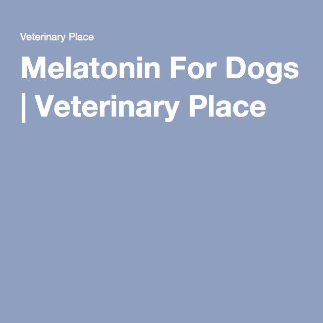 Melatonin For Dogs, Dog Medicine, Dog
