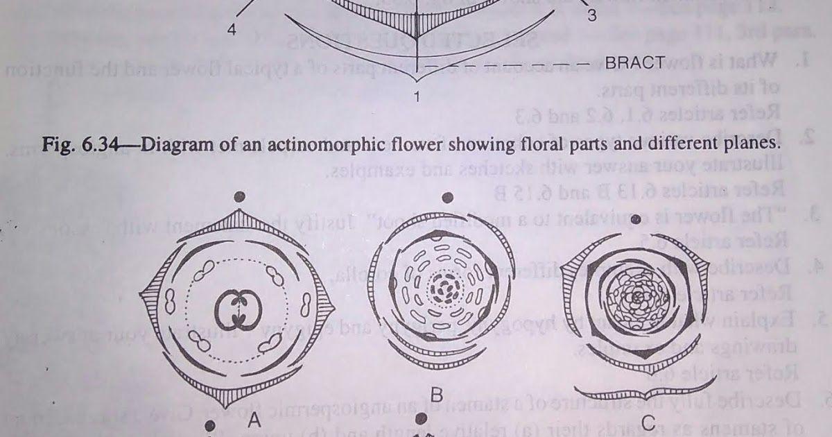 Floral formula floral formula is an expression summarising the floral formula floral formula is an expression summarising the information regarding the number of floral ccuart Images