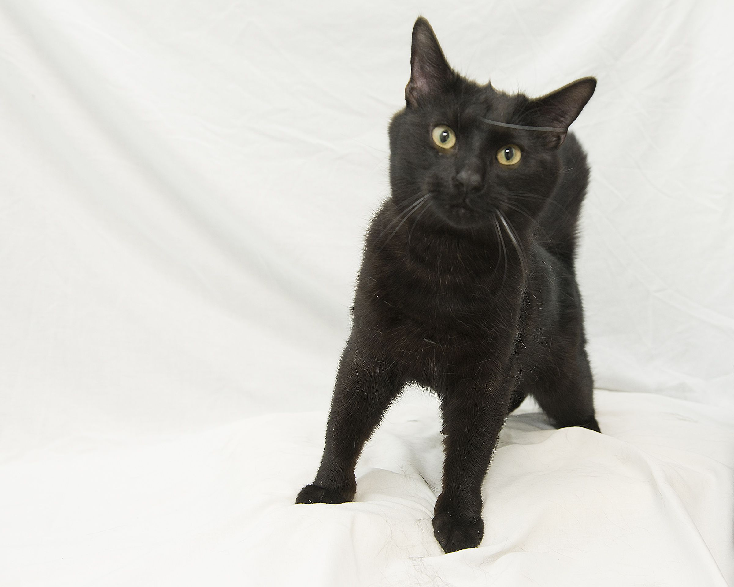 Jasper Is So Excited To Have Gotten A Foreverhome Opt2adopt Livessaved Kittylove Humane Society Kitty Animals