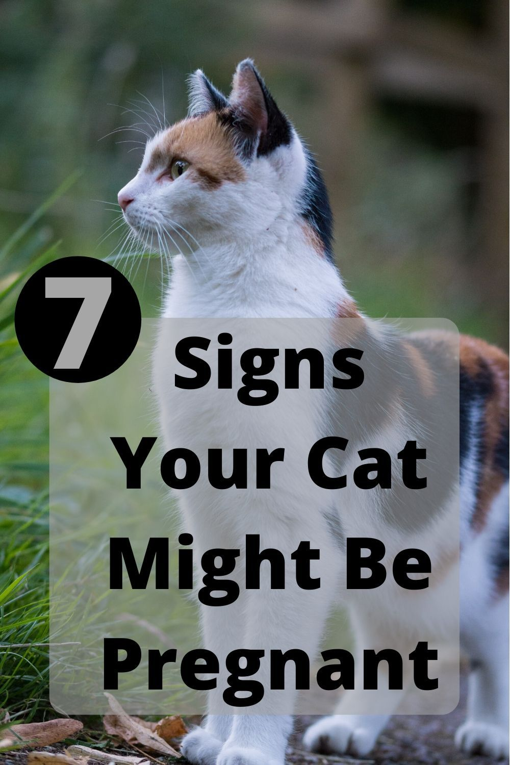 7 Signs Your Cat Might Be Pregnant Welfar4us In 2020 Cats Cute Cats And Dogs Cat Life Hacks