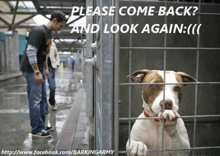 Please Come Back And Look Again Dogs Shelter Dogs Dog Adoption