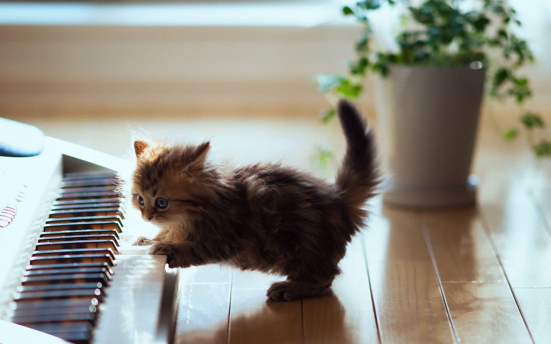 Pin by ryan mitchell on catblog Pinterest