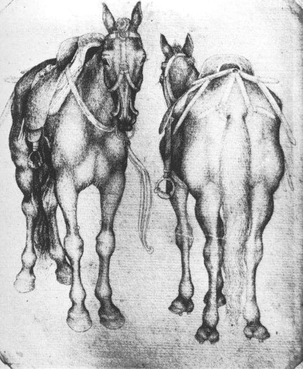 Pisanello - Cavalli