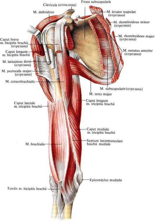 536843218062163493 on muscle pain location diagram