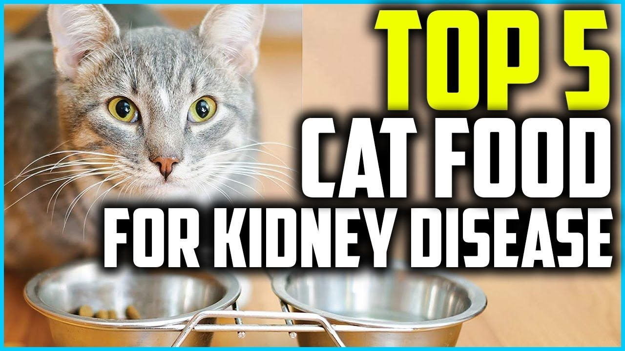 Holistic Cat Food For Kidney Disease