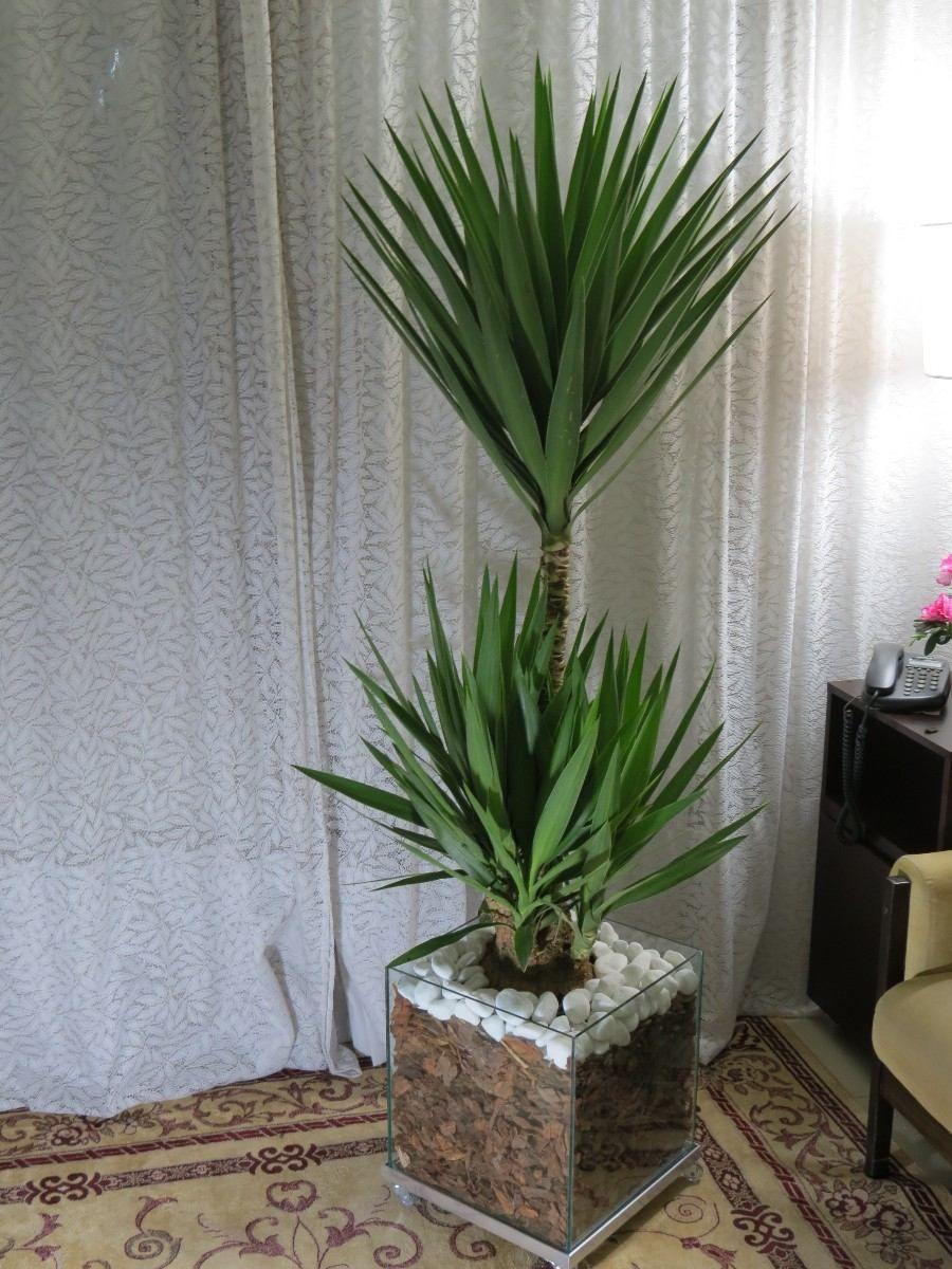 Planta iuca verde pinterest for Plantas decorativas resistentes