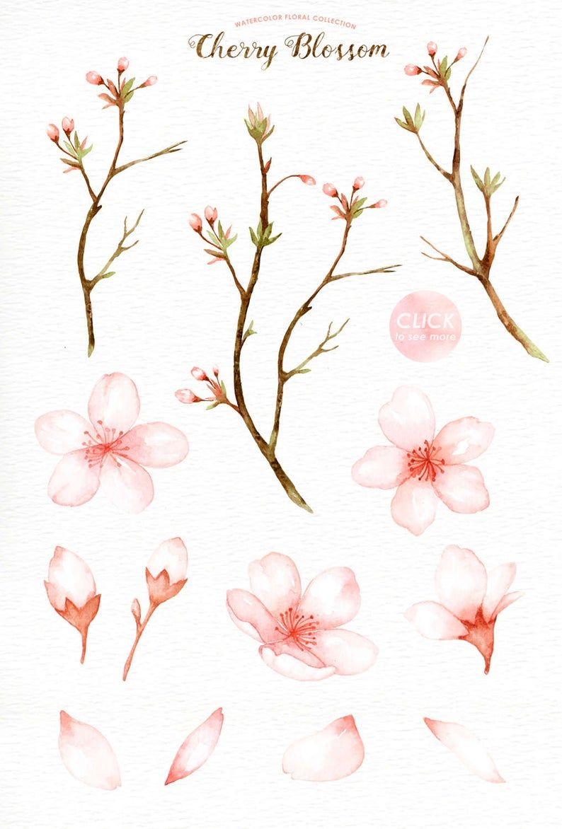 Cherry Blossom Watercolor Clip Art Spring Flower Flowers Clip Art Sakura Wedding Invitation Diy Pink Flowers Graphics Spring Set Cherry Blossom Watercolor Cherry Blossom Drawing Cherry Blossom Art