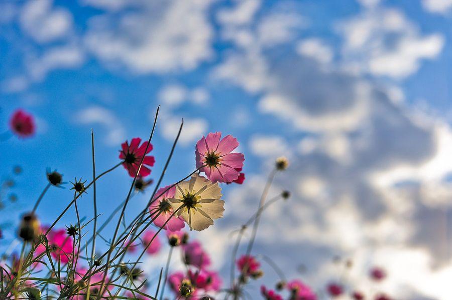 Under the blue sky by harrynavy