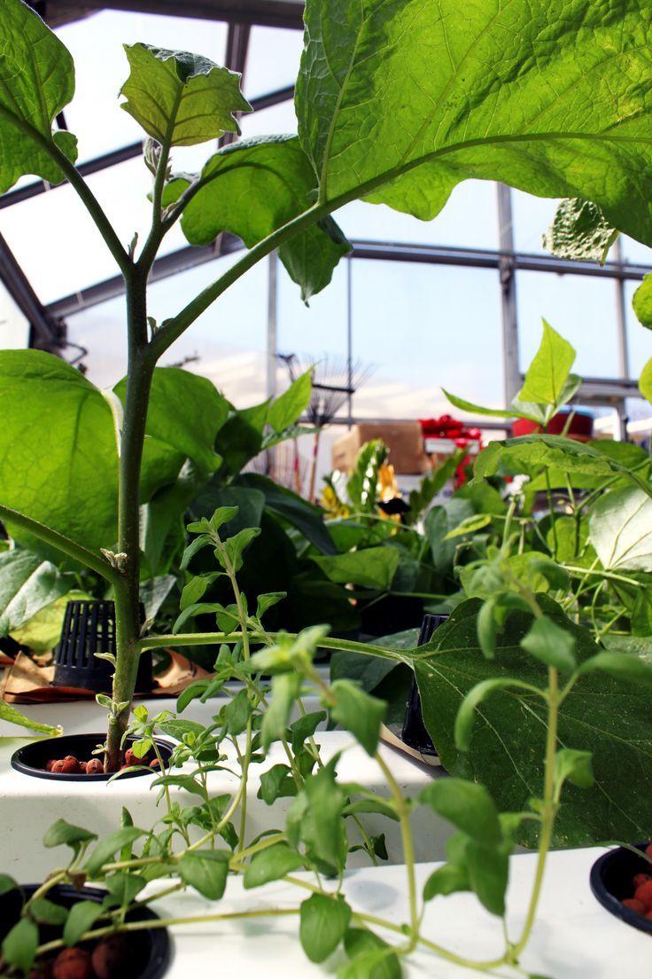 Grow herbs hydroponics diy hydroponics growing herbs