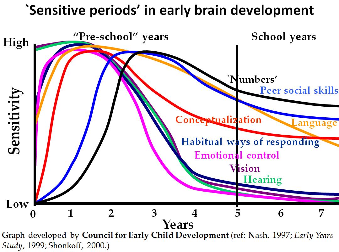 Sensitive Periods Of Early Brain Development