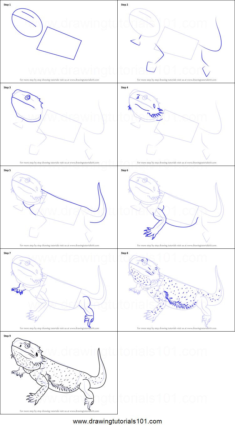 Bearded Dragon Printable Diagram - Electrical Drawing Wiring Diagram •