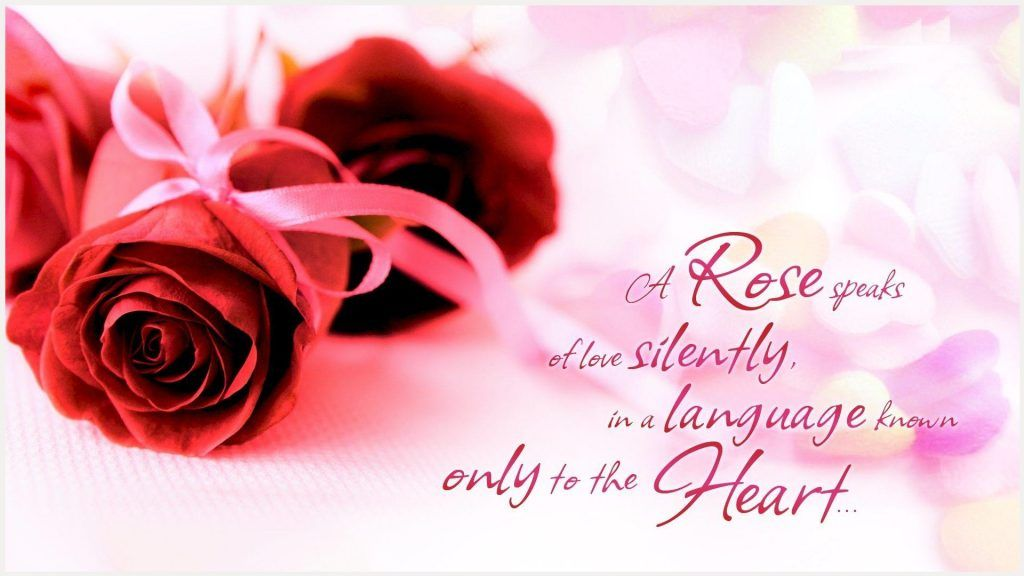 Red Rose Love Words Quotes Wallpaper Red Rose Love Words Quotes