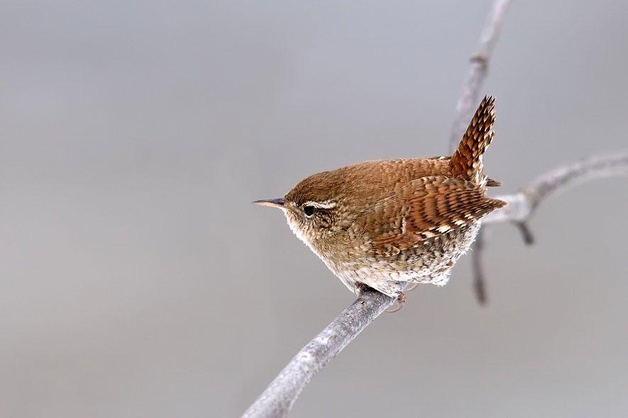 Besuch Am Vogelhauschen Diese Wintervogel Sollten Sie Kennen