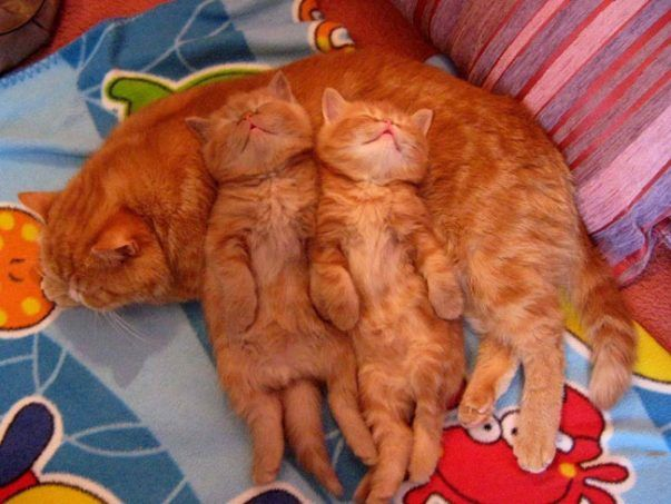 Saturday's Cutest: Mom Makes For A Perfect Pillow...