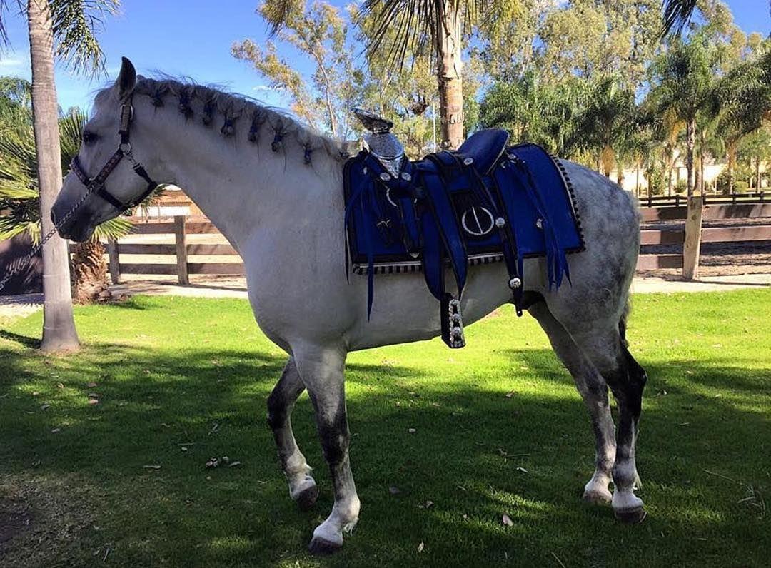 Silla para montar hecha 100 a mano por monturas y for Monturas para caballos