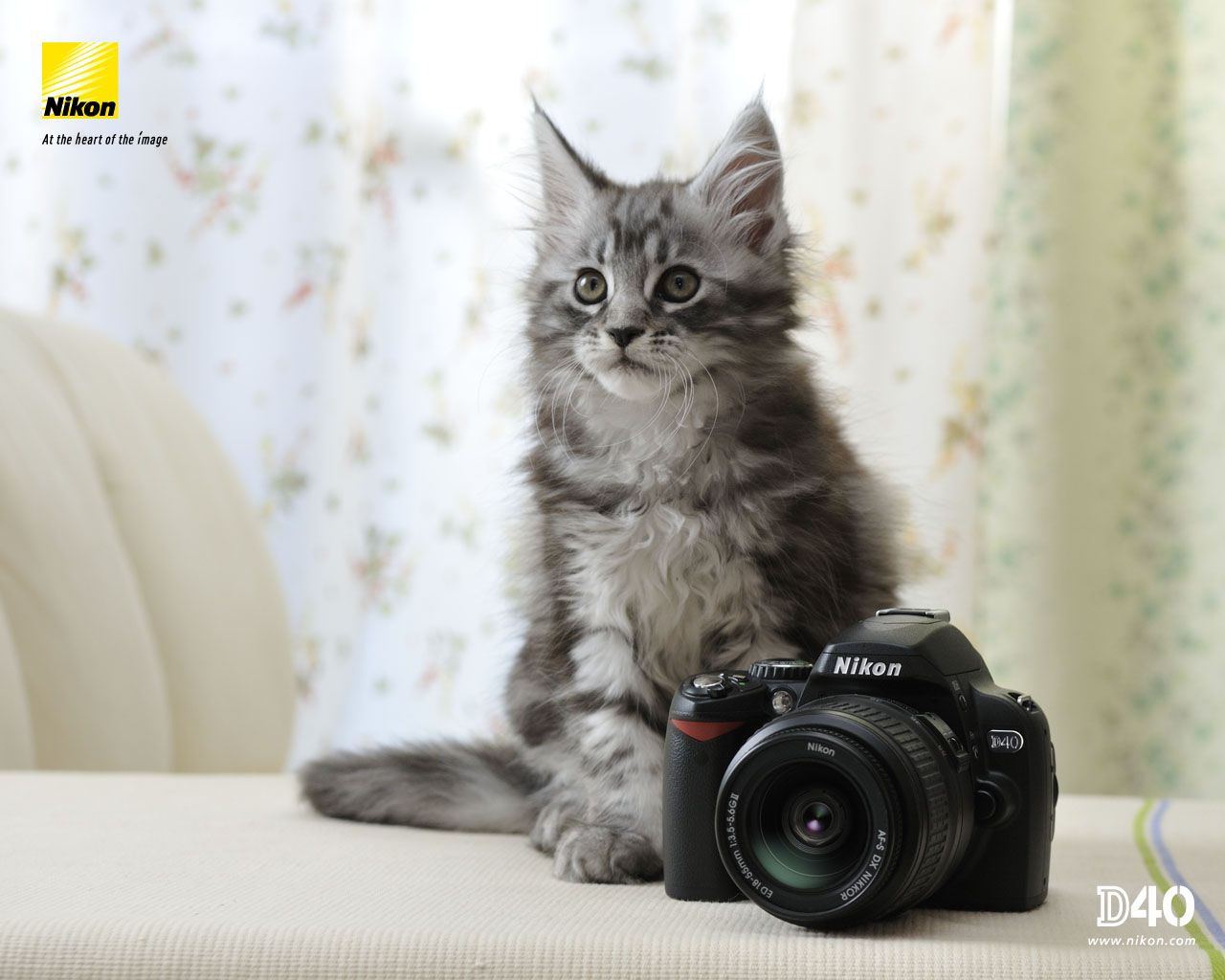 pretty kitty nice camera photography Pinterest