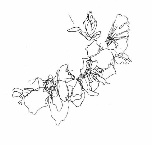 Bluebells spring flowers continued line drawing by louise taylor textile designer