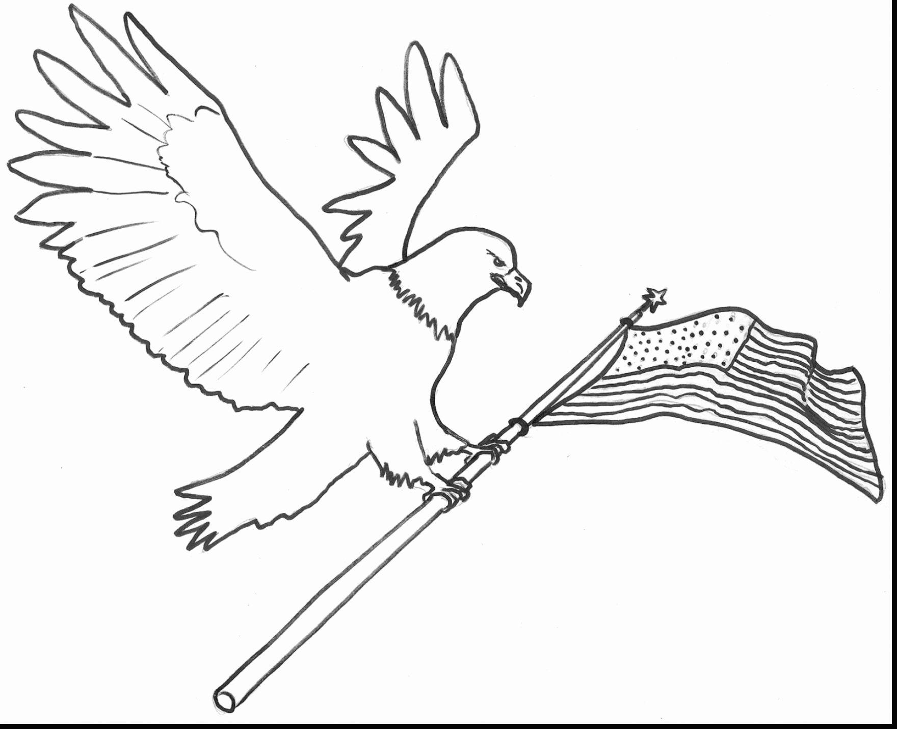 Bald Eagle Coloring Picture Di