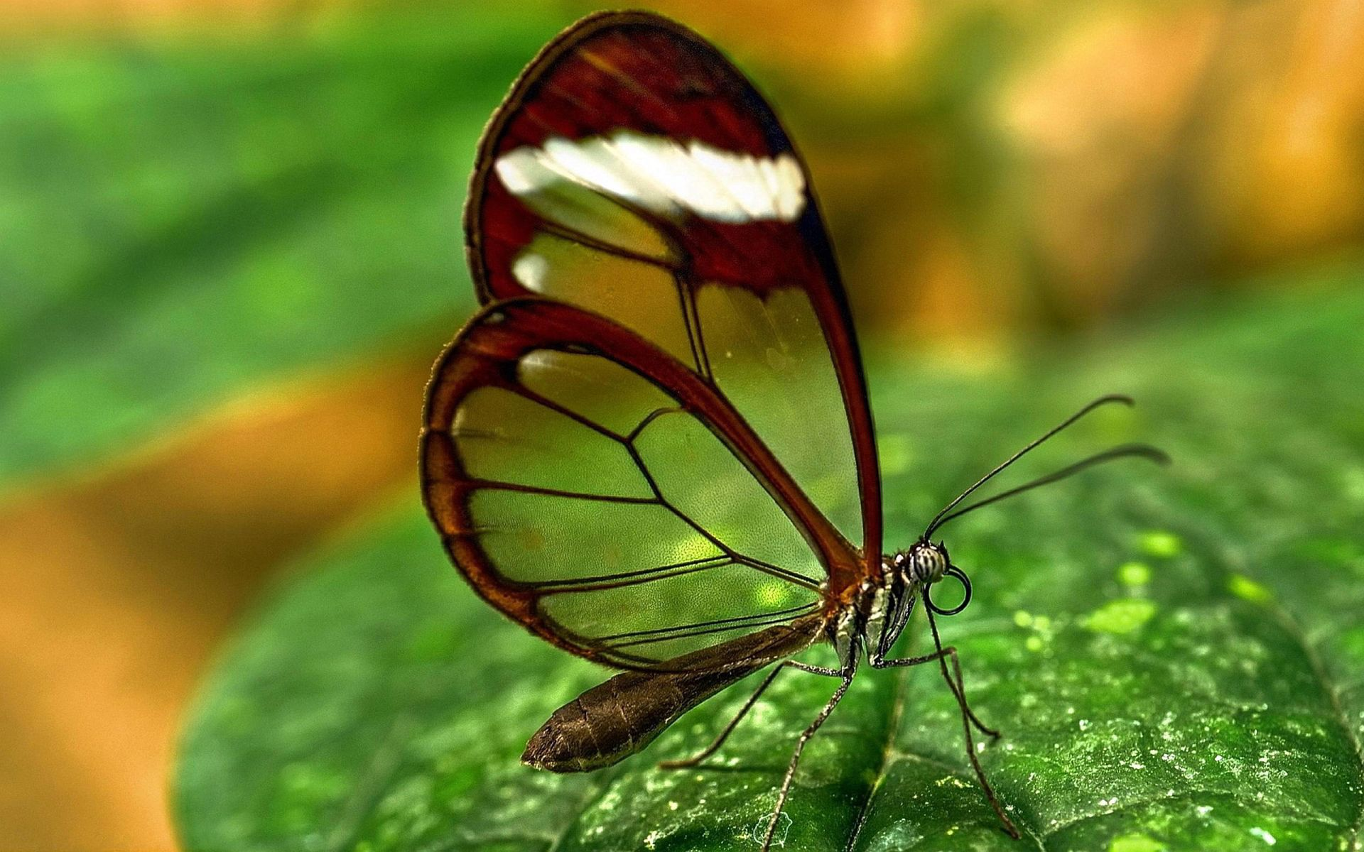 ultra hd transparent wings | ultra hd animals wallpapers