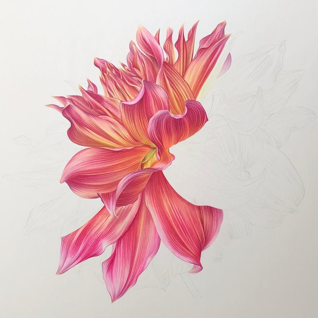 Work In Progress Dahlia Café Au Lait Royal Watercolor Size 55 X 44 Cm Botanicalart Watercolor Art Flowers Pa Botanical Art Flower Art Flower Drawing