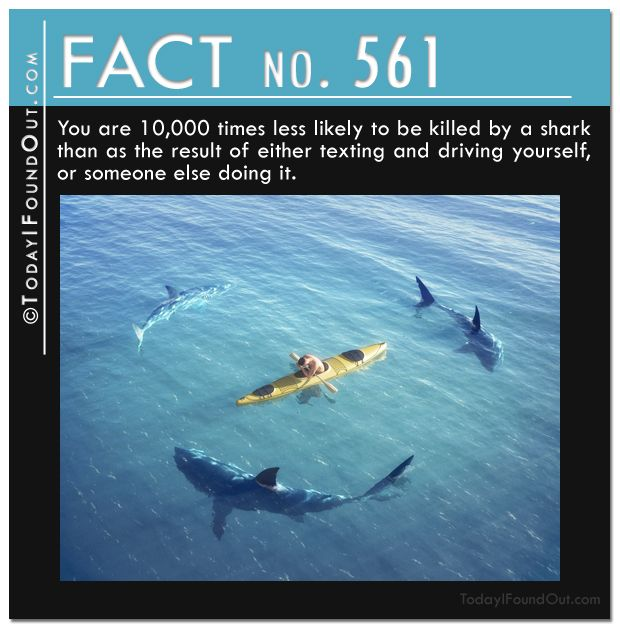 Gonna get back to you on this one - I live in Hawaii & We snorkel, swim, and surf, in the -TIFO Quick Fact 561