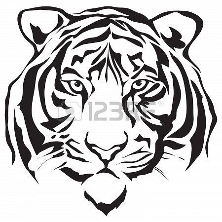 Stock Photo Dessin Tigre Dessin Noir Et Blanc Et Visage De Tigre