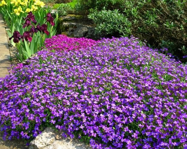 Skalniak 5 Najpopularniejszych Bylin Na Skalniaki Zdjecia Plants Garden