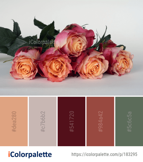 Color Palette Ideas From Flower Rose Family Image Vintage Colour Palette Vintage Paint Colors Color Palette