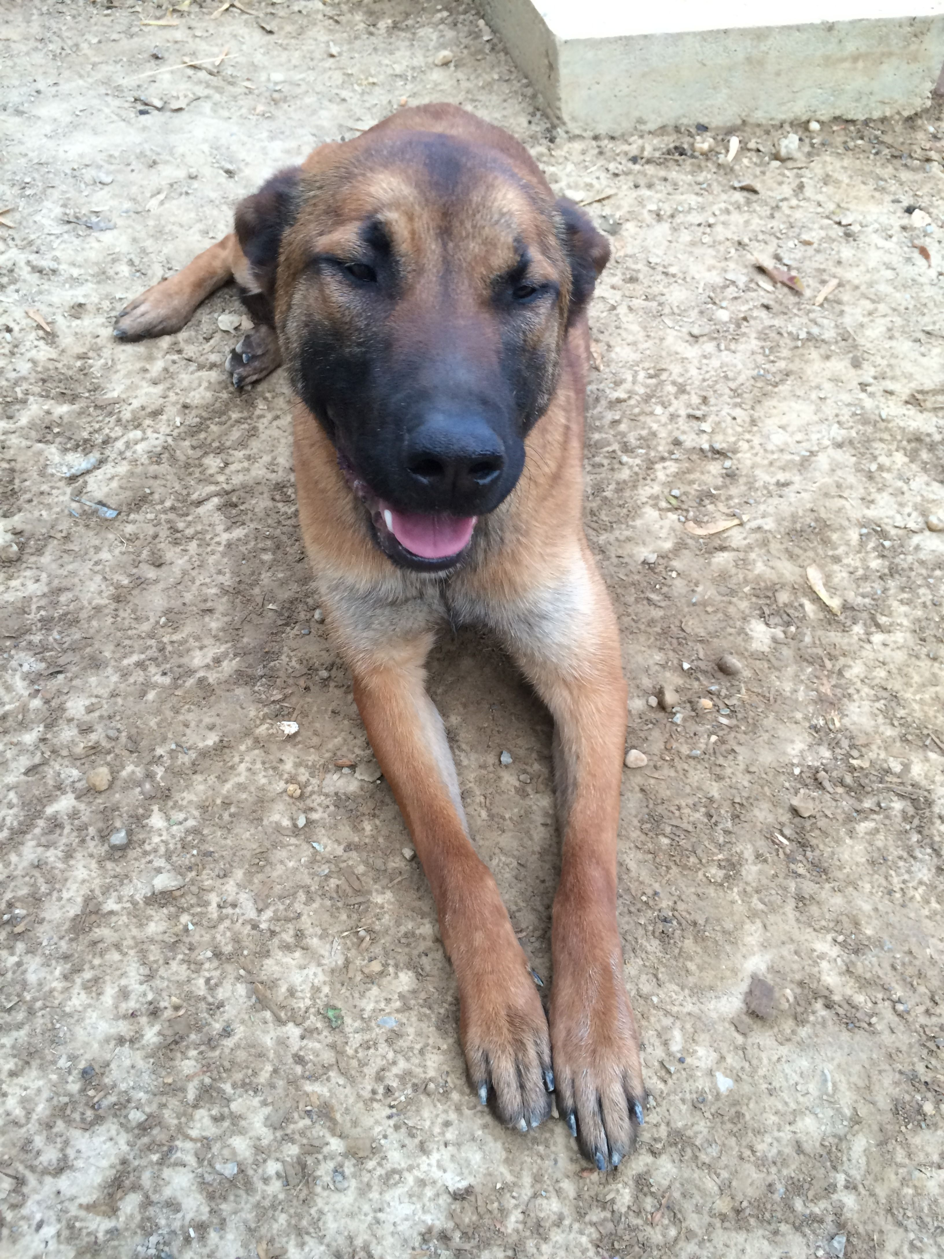 K9 Bettie Now Lives In Iowa She S A Beauty With Images Family