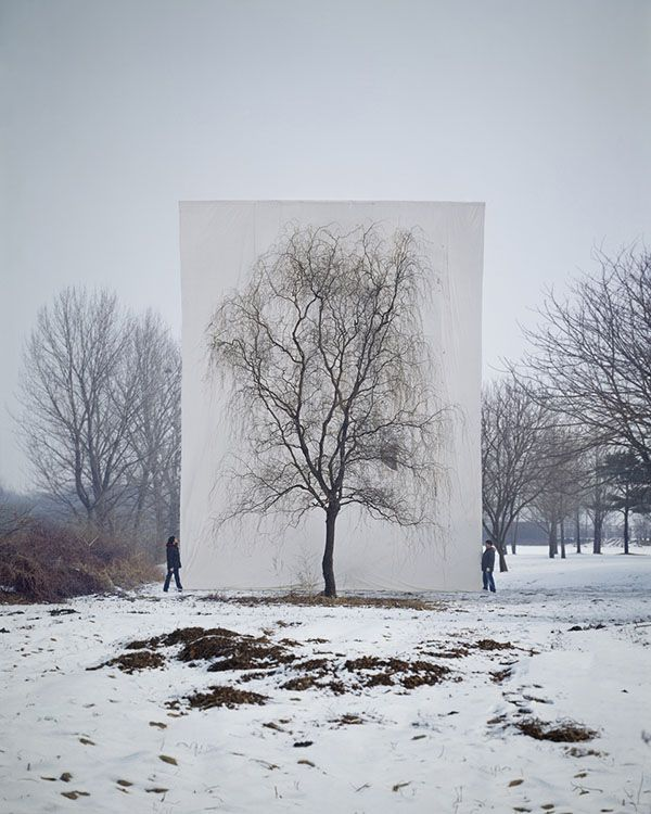 """Tree,"" South Korean photographer Myoung Ho Lee"