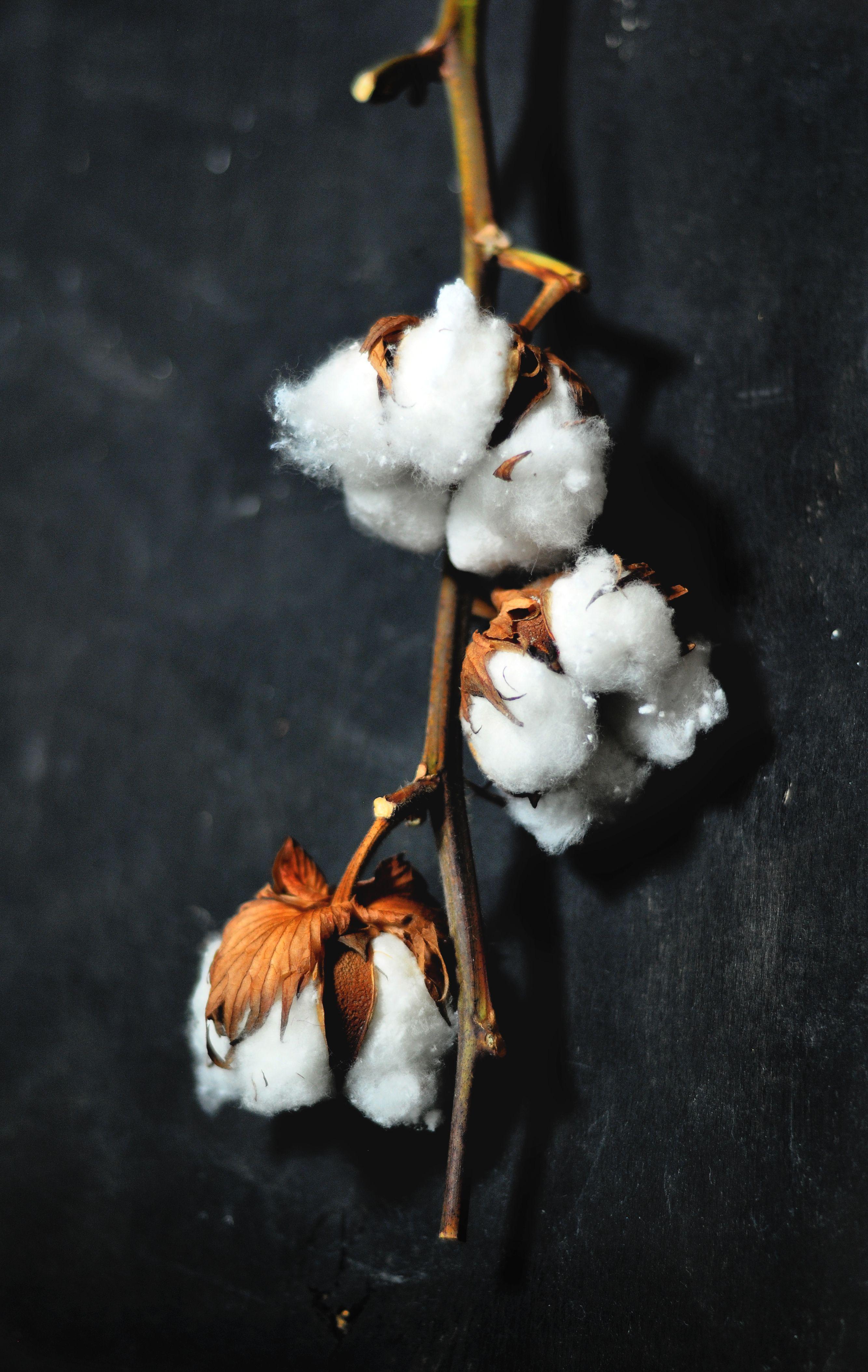 Cotton Flowers Black White Bronze Live Like Goose Pinterest