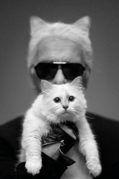 Karl Lagerfeld. Muotokuva jossa focus on kohteen kissassa eikä kohteessa: vaatii ikonin aseman että tämä toimii. Leikkisä kissamies aurinkolaseissaan pysyy silti potretin päähenkilönä.