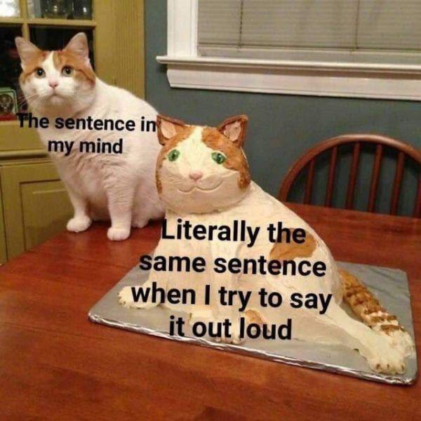 Pin De Vanessa Ezeriguer En Cats Meme Gato Gatos Mascotas Memes