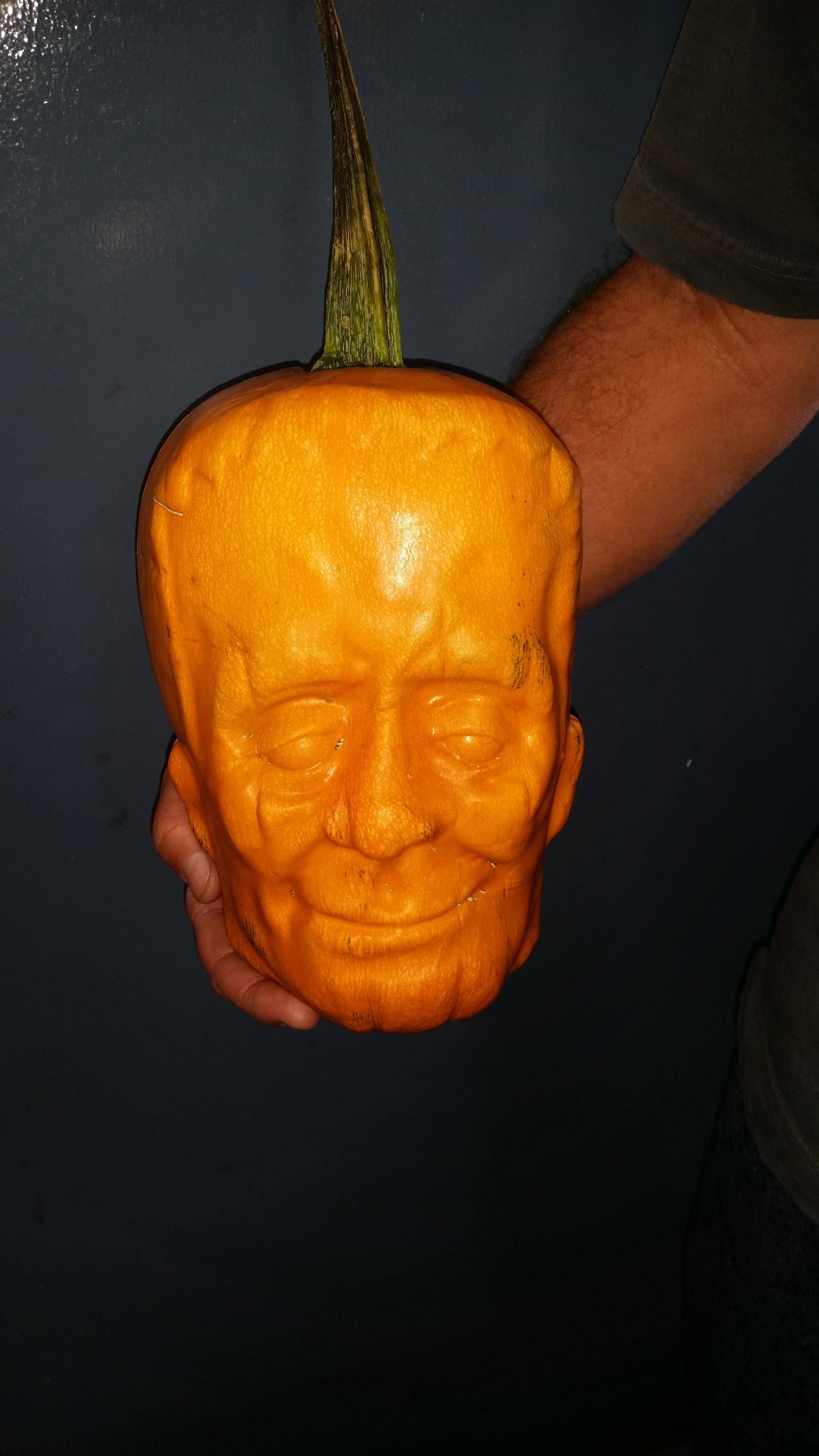 what happens when you grow a pumpkin inside a plastic mold halloween funnystatus - Growing Halloween Pumpkins