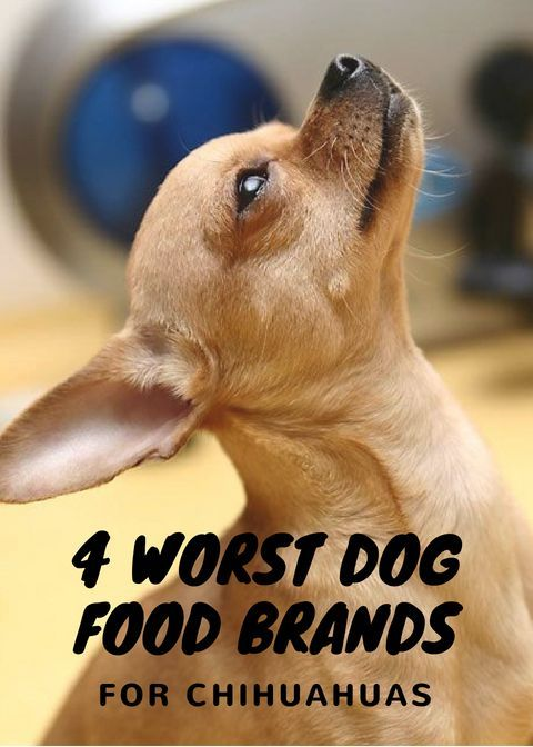 4 Worst Dog Food Brands You Can Feed Your Chihuahua Chihuahuas