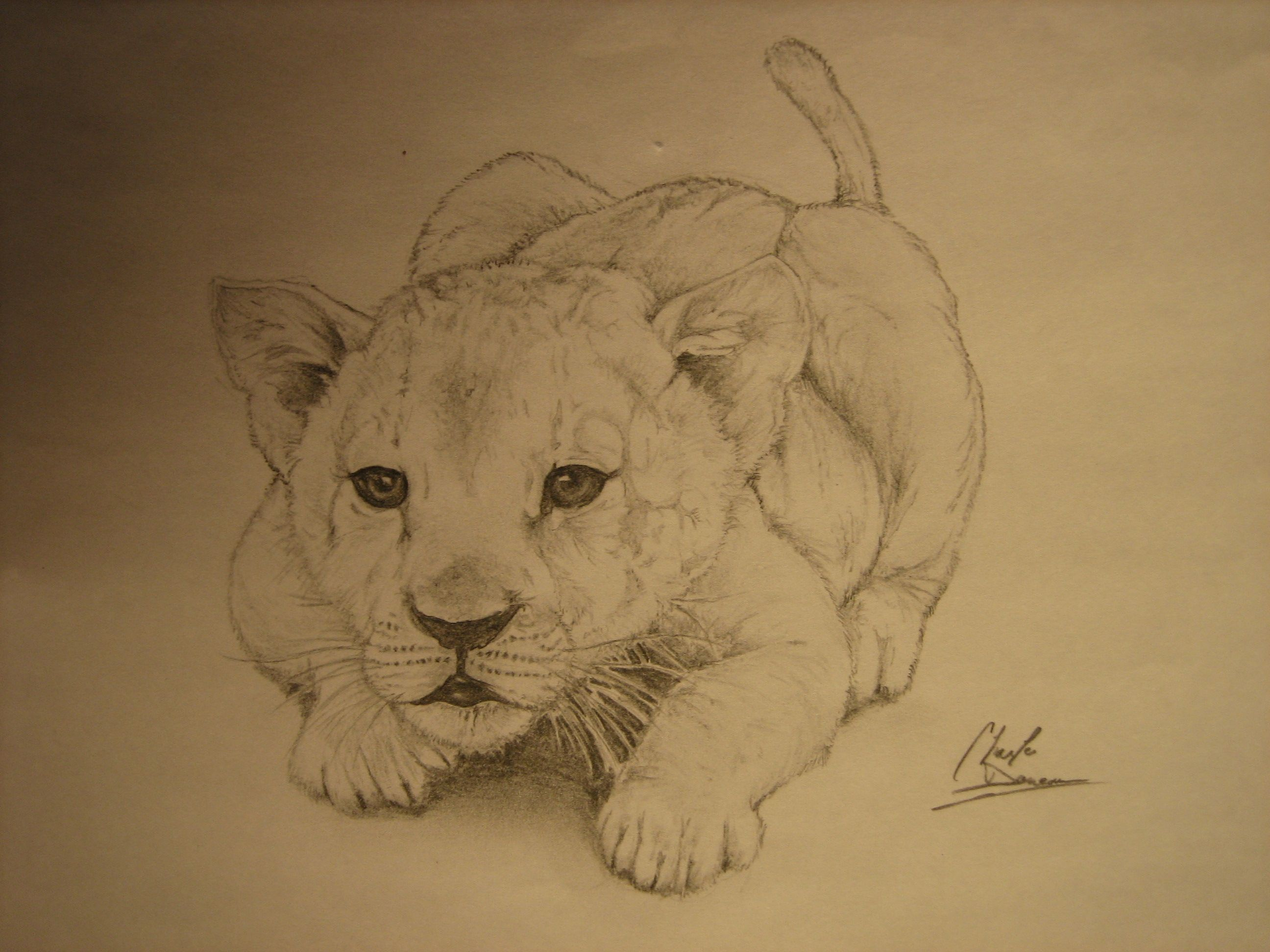 Little Baby Lion By Cdan777 On Deviantart Tatouage Lionceau