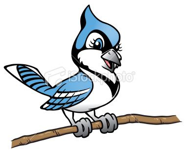 you find here a happy little blue jay perched on a branch it is a rh pinterest com