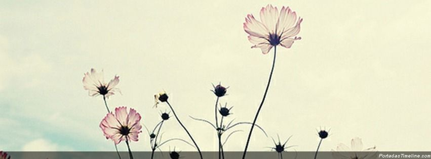 Book Cover Portadas Vintage ~ Portadas para facebook flores vintage portada