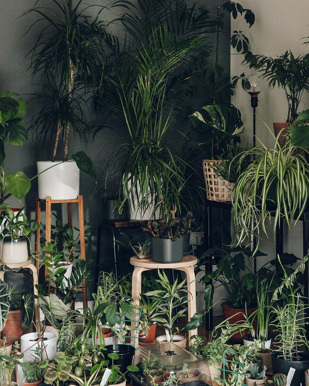 Plants Inside Rooms: Keeping Warm By Snuggling Together.