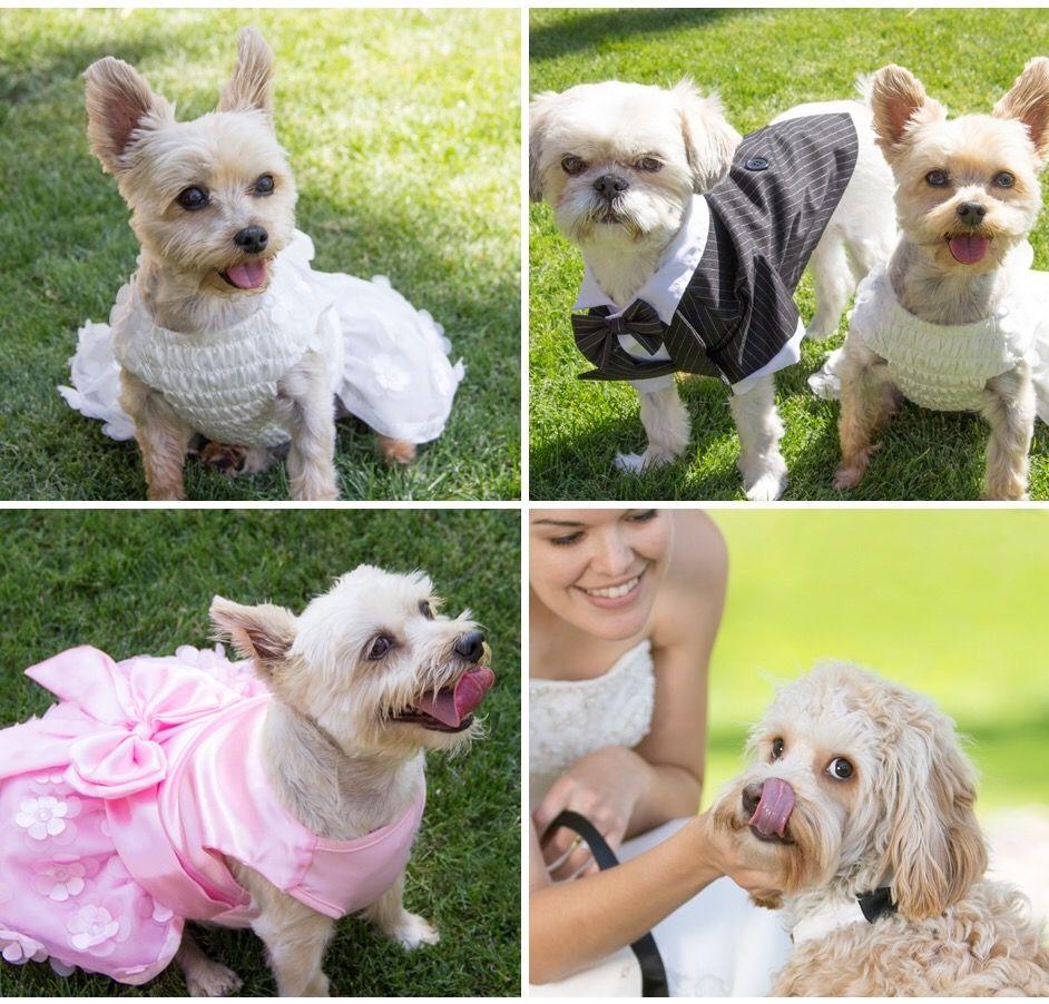 Pet Friendly Weddings Including Pets In Big Day Plans Petsmart Dog Pet Paradise Dog Blanket