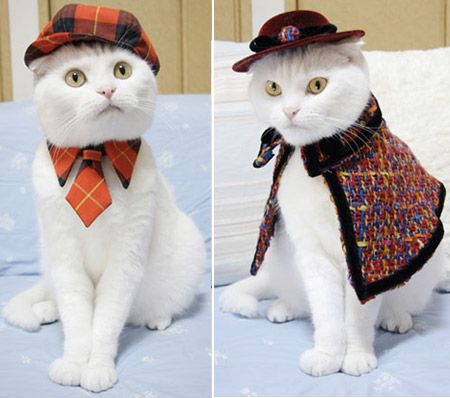 feline fashions a real cat in a hat and worse cat