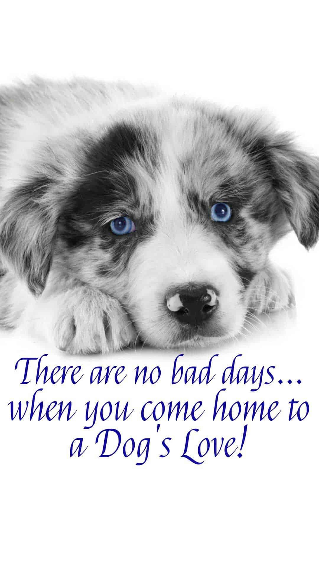 20 Free Dog Wallpapers I Phone And Android 20 Hd Sized Homescreen Wallpaper Dog Pictures Best Dog Quotes Dogs Dog Pictures